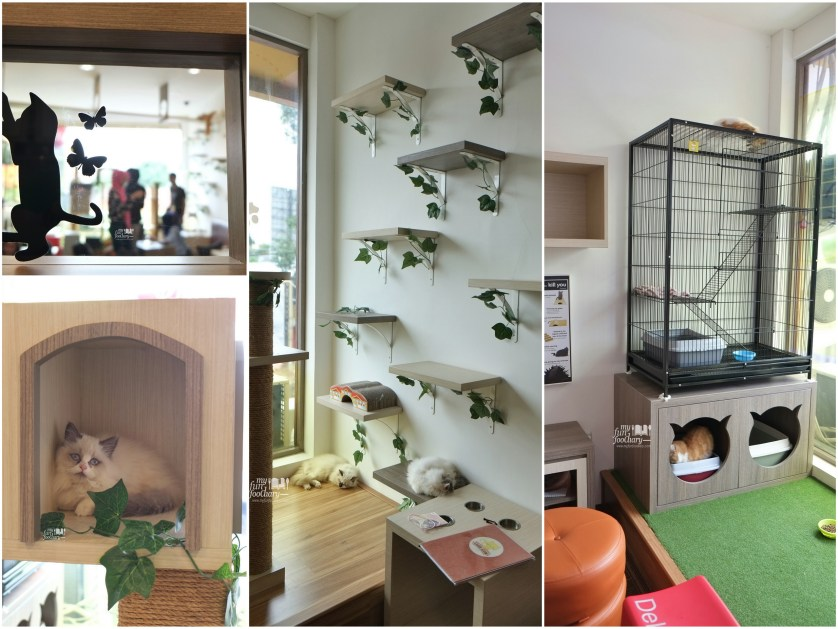 Ambiance Cutie Cats Cafe by Myfunfoodiary collage