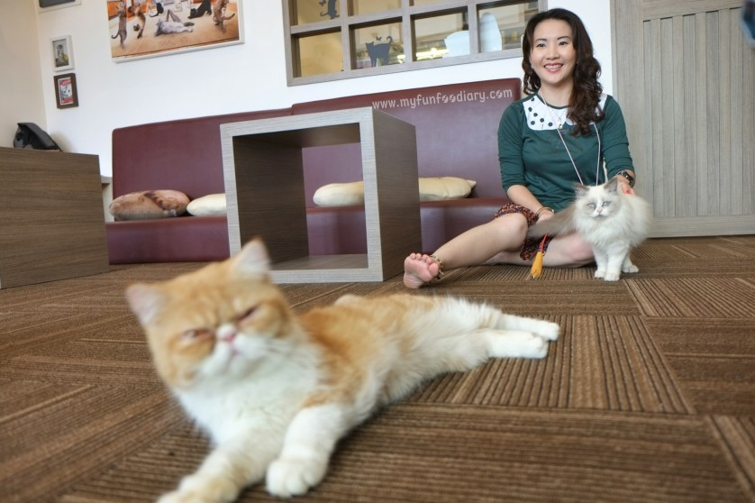 Ambiance at Cutie Cats Cafe by Myfunfoodiary