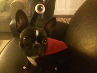 Nibbler Dog Cosplay From Futurama