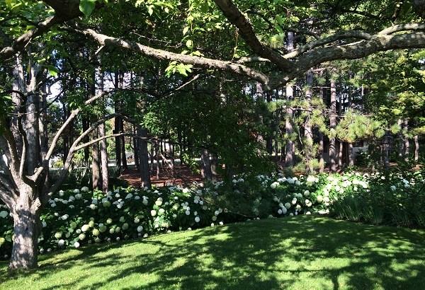 モントリオール植物園、日本式庭園であじさいが満開