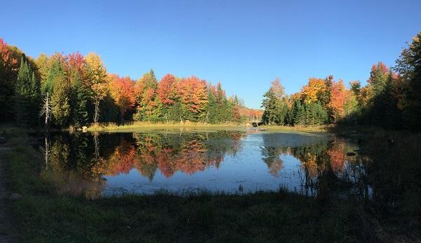 モントリオール,秋,紅葉