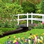 庭の種類-どんなスタイルのガーデン作りをする?
