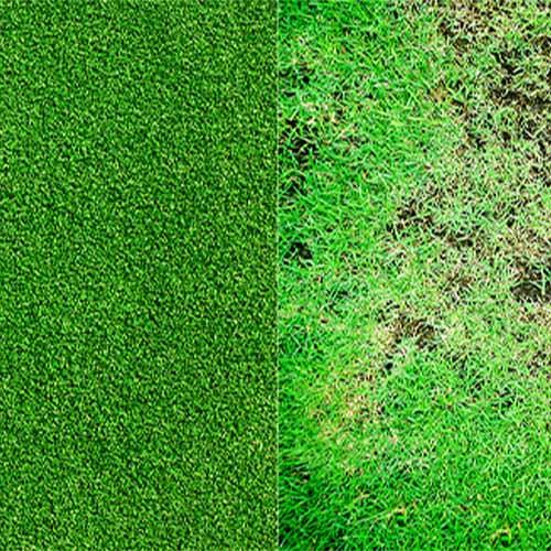 Artificial Grass vs. Real Grass