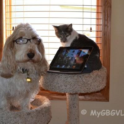Understanding Cats | GBGV