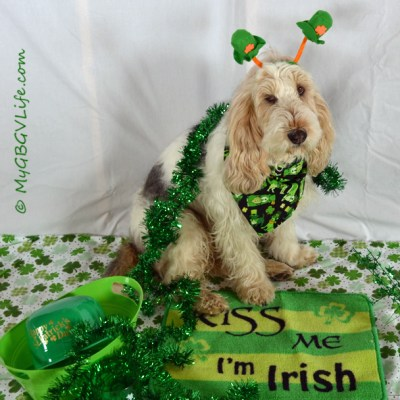St. Patrick's Day 2013   GBGV