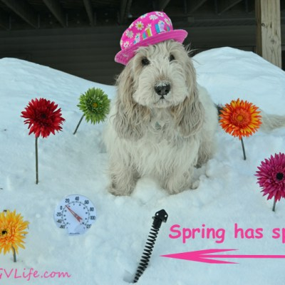 Springtime In Minnesota | GBGV | Wordless Wednesday