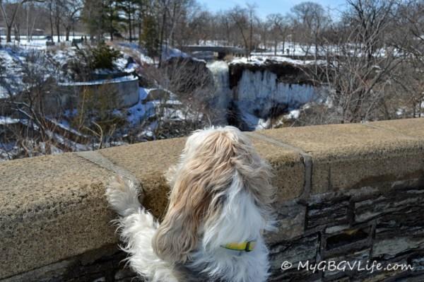 Hmmm...looks like a giant doggy drinking fountain!