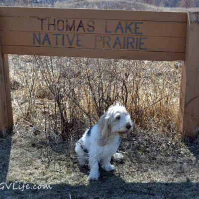 Thomas Lake Trails | GBGV | FitDog Friday