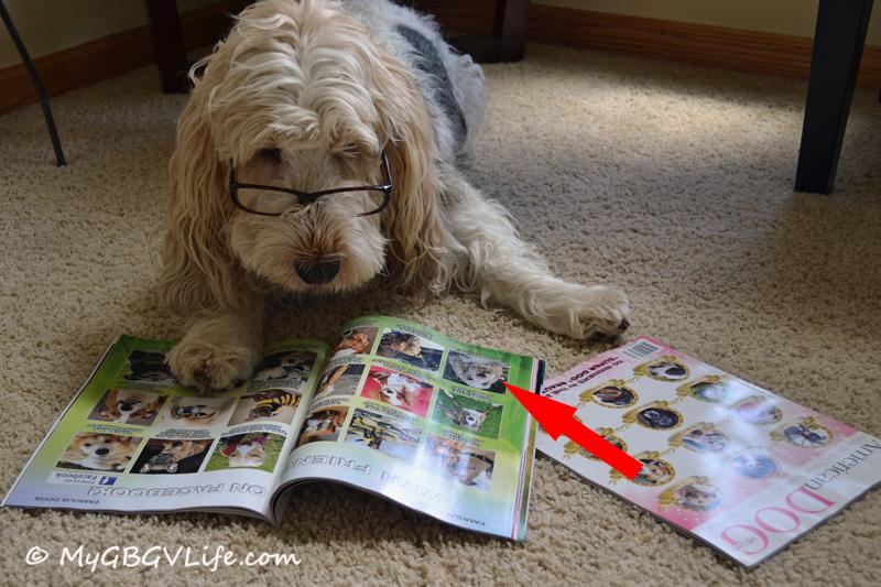 American Dog Magazine