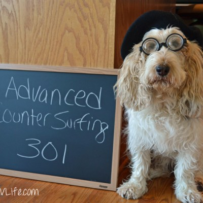 Advanced Counter Surfing 301 | GBGV | Monday Mischief