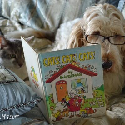 Cats, Cats, Cats! | GBGV | Wordless Wednesday