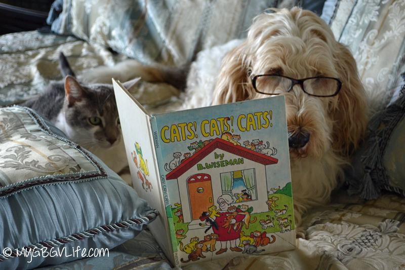 GBGV cats cats cats