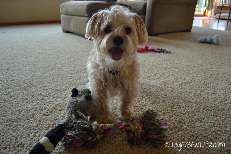Buddy with toys