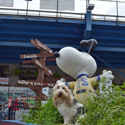 St. Paul Saints | GBGV | Wordless Wednesday