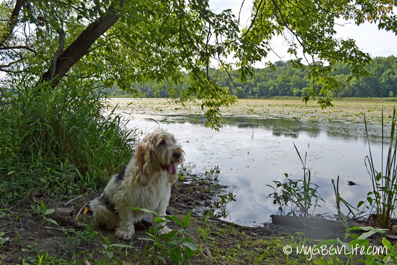 GBGV on riverbank
