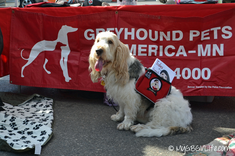 GBGV Greyhound Booth