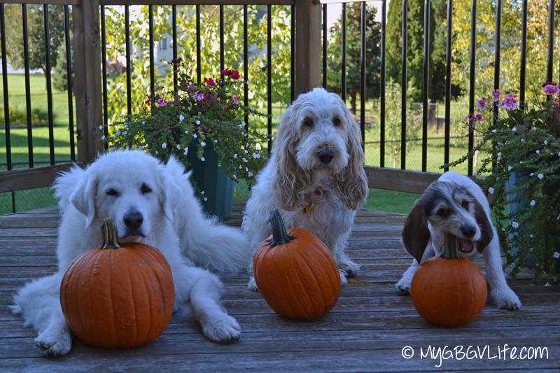 GBGV our pumpkins