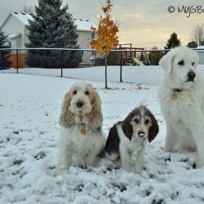First Snow Fun | GBGV | Monday Mischief