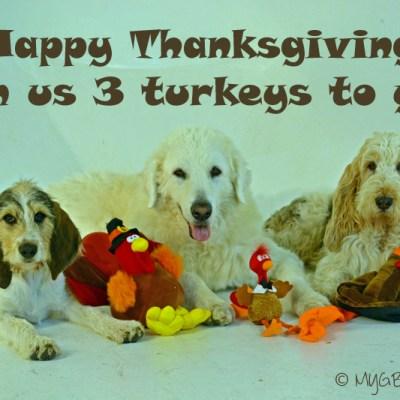 Happy Turkey Day | GBGV | This n That Thursday