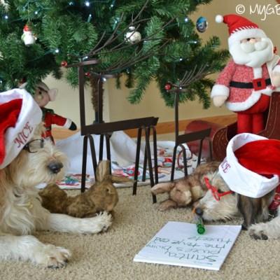 Christmas Preparations | GBGV