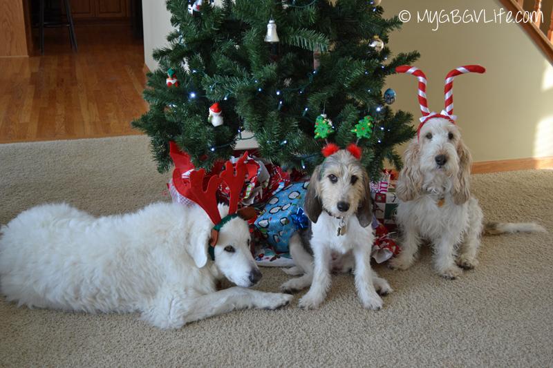 My GBGV Life ready for Christmas