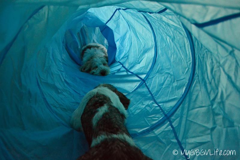 My GBGV Life tunnel nap