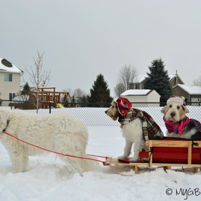 Dog Sledding Minnesota Style | GBGV | Wordless Wednesday