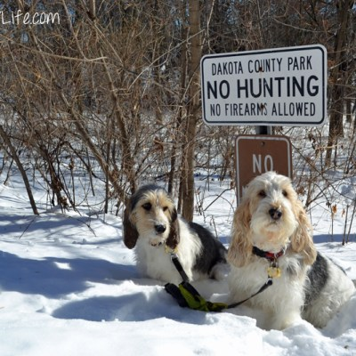 Does This Sign Apply to Hounds? | GBGV | Wordless Wednesday