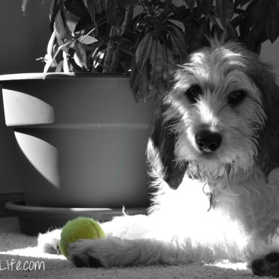 The Tennis Ball | GBGV | Black and White Sunday