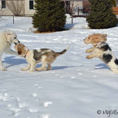 Fit Fun For Four | GBGV | FitDog Friday