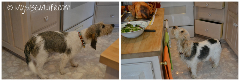 My GBGV Life smelling turkey