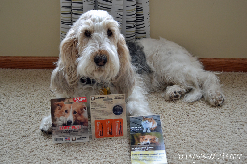 My GBGV Life with #mobiPET kit, the world's first photo amber alert for pets