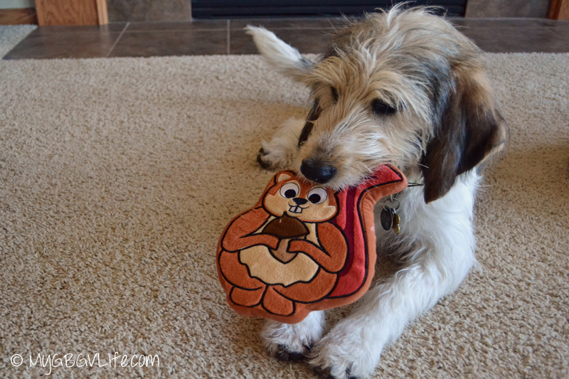 My GBGV Life Bailie with her new #PrideBites squirrel toy