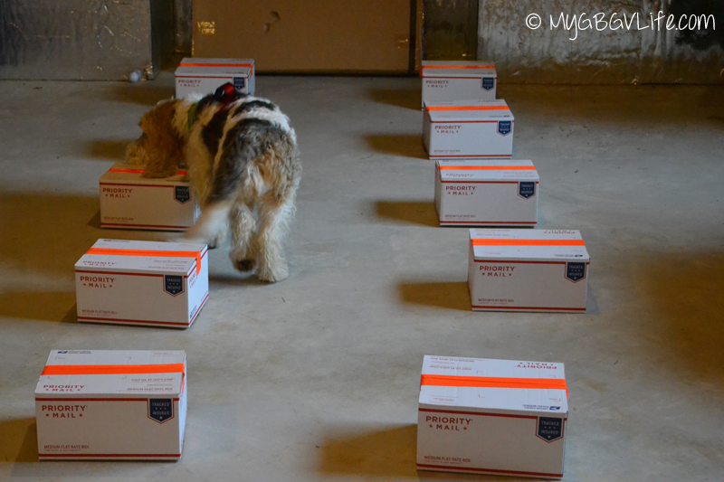 My GBGV Life studying the boxes going down the row