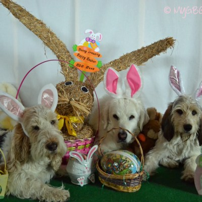 Happy Easter 2014 | GBGV