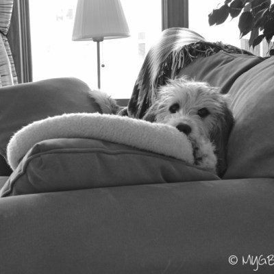 The Naughty Puppy Continues | GBGV | Black and White Sunday