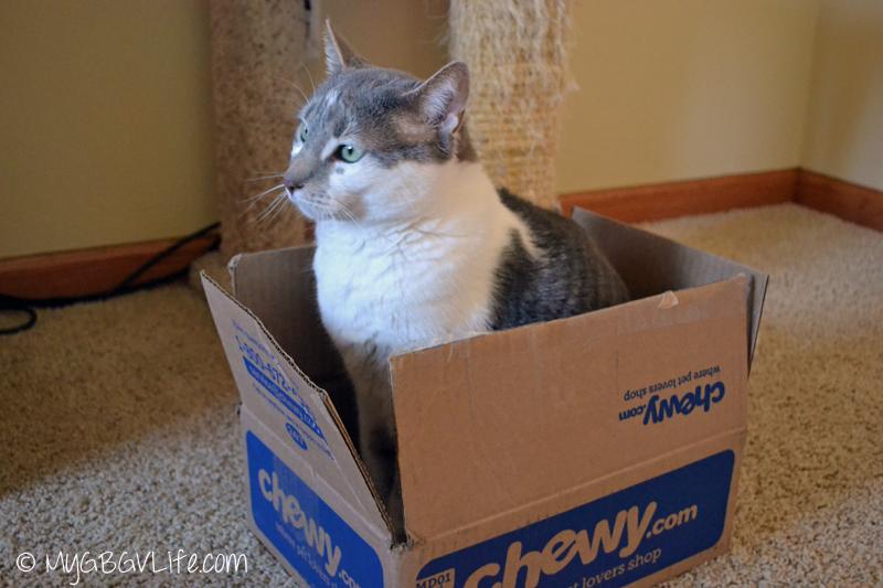 My GBGV Life cat bro bert in Chewy.com box