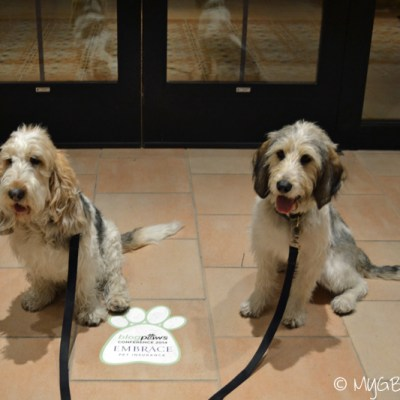 10 BlogPaws activities for a GBGV in Las Vegas
