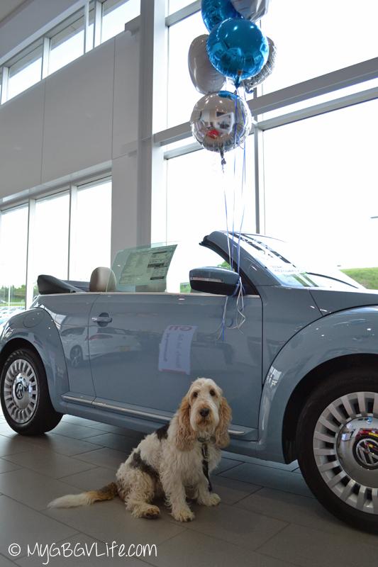 My GBGV Life car shopping found a blue Beetle convertible