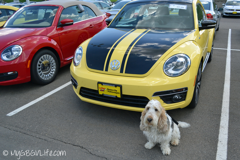 My GBGV LIfe car shopping finds a Beetle