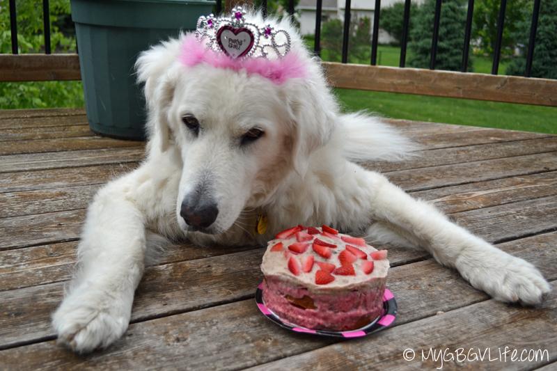 Who S Turning 12 Happy Birthday Katie Mygbgvlife