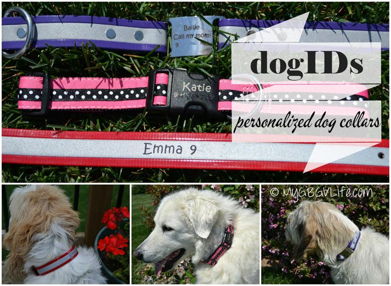 My GBGV Life dogIDs.com collars