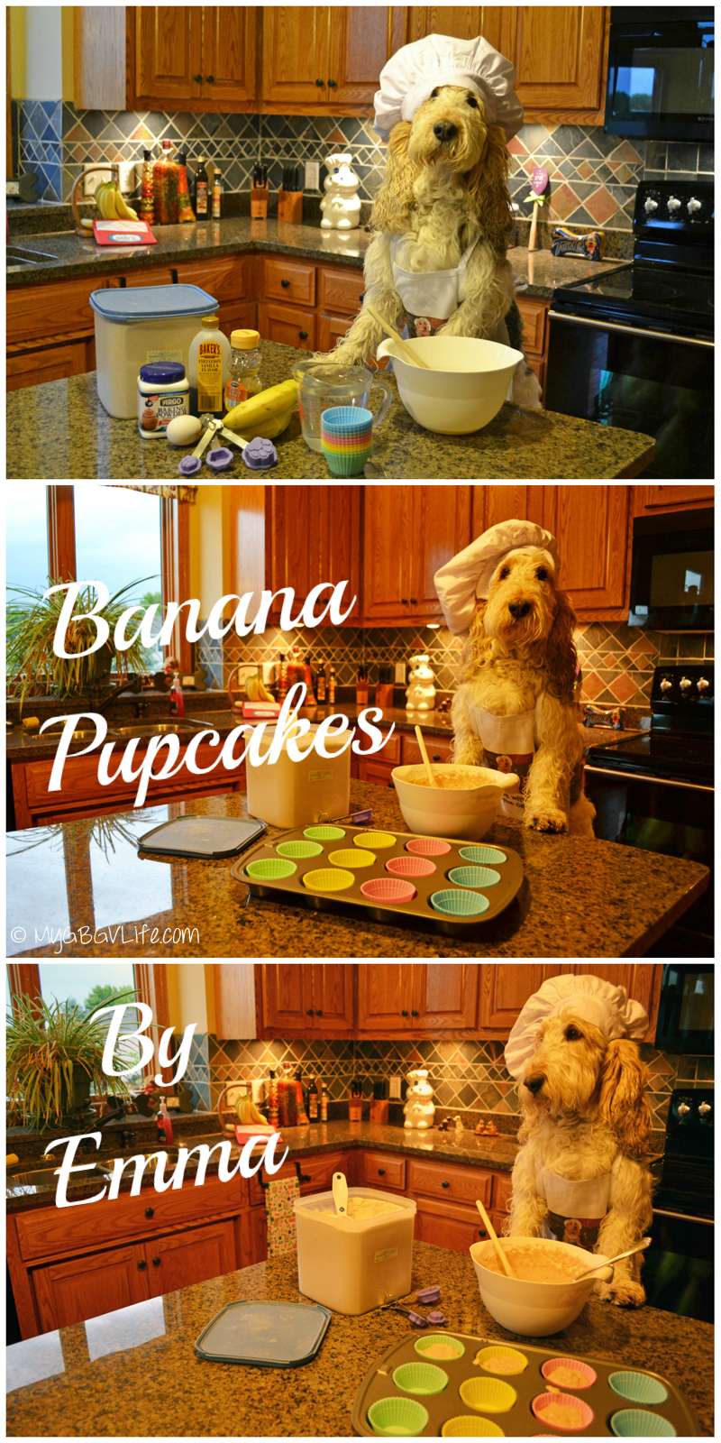 My GBGV Life baking Banana Pupcakes because Bailie is turning one