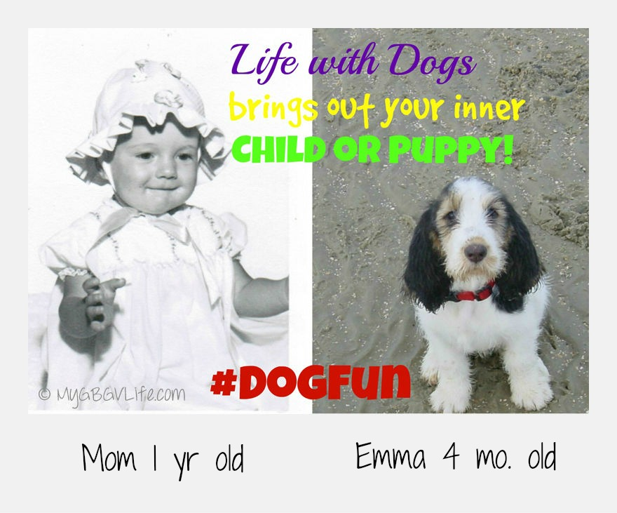 My GBGV Life #DogFun why life with dogs is best