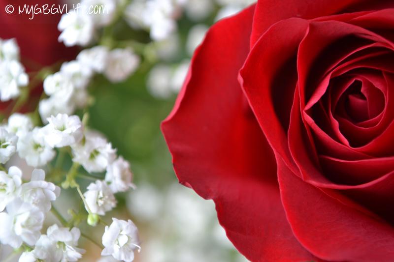 My GBGV Life spring beauty, a rose