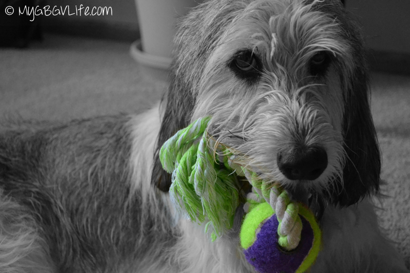 My GBGV Life Purple Girl with her toy