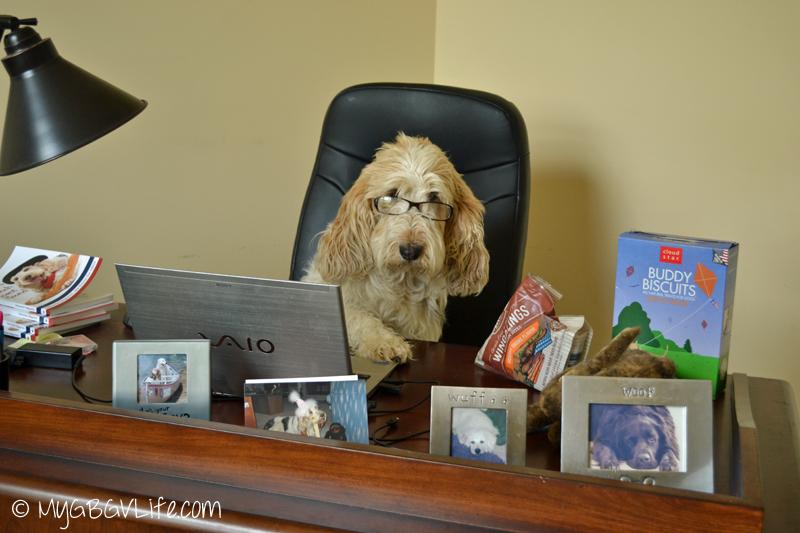 My GBGV Life CEO Emma on the job