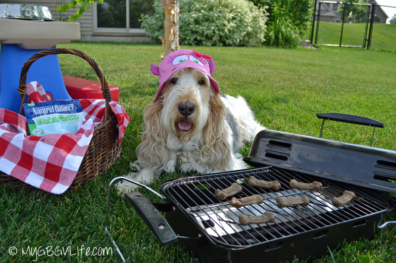 My GBGV Life grilling chewy.com treats brought by the delivery dog