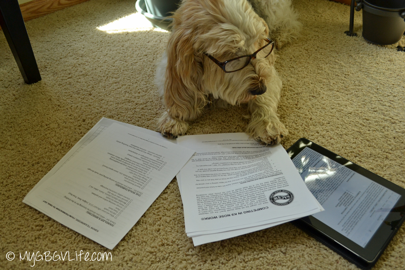 My GBGV Life nose work news reading the rules