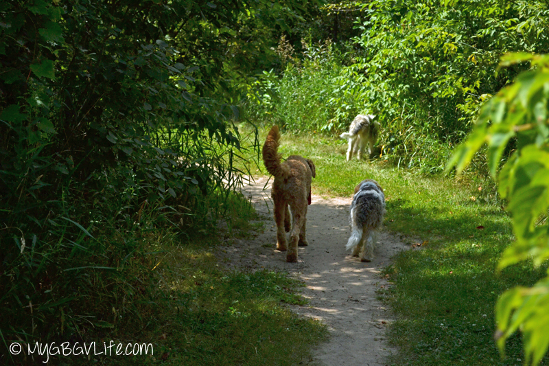 My GBGV Life walking with friends at the dog park
